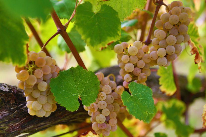 Green wine tour